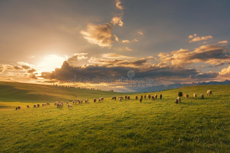 Quiet pastures in the morning stock photography