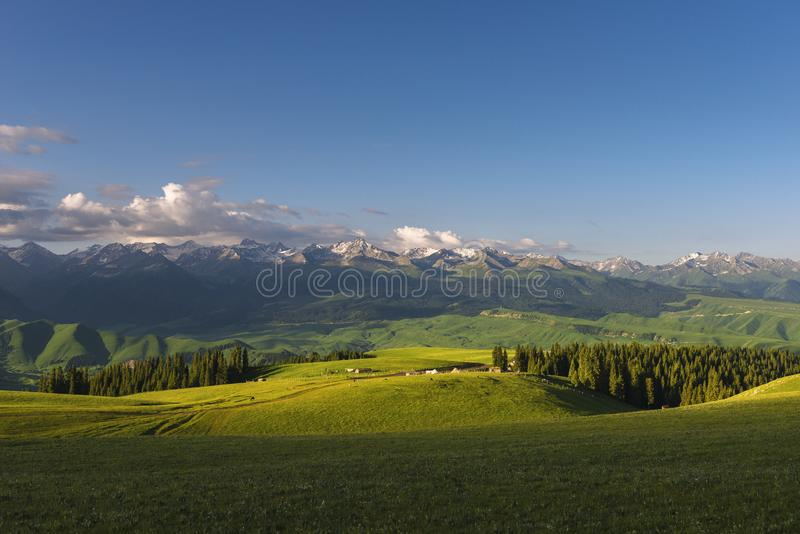 Quiet pastures in the morning royalty free stock image