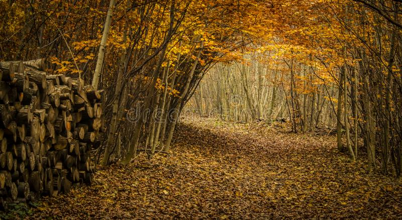 Quiet path in colorful forest in October royalty free stock image