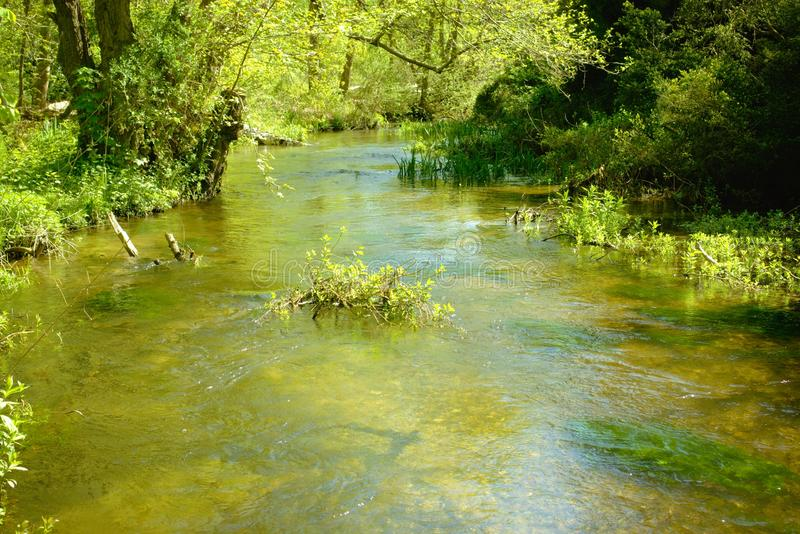 Peace along the woodland river. A quiet section of the river Nar on a beautiful spring day where it runs through woodland near Narborough in Norfolk, England royalty free stock photo