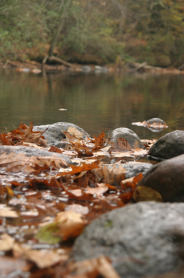 Download Quiet Stream stock photo. Image of calm, water, fall, foliage - 174612