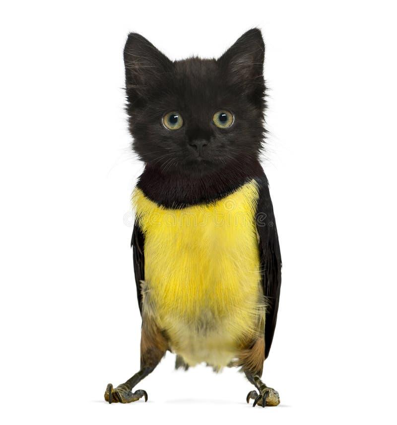 Quimera con un gatito y un cuerpo negros del aga verde del tucán de Aracari imagen de archivo