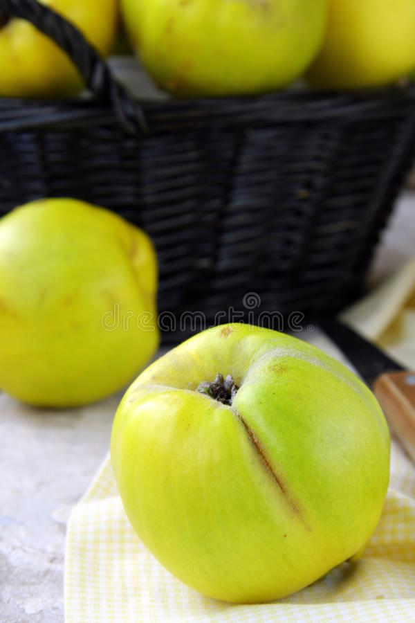 Download Quince stock image. Image of apple, green, color, organic - 16782469