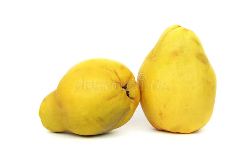 Download Quince stock photo. Image of nutrition, food, closeup - 25449278
