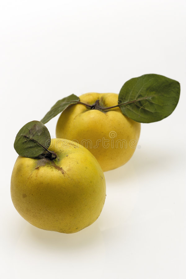 Download Quince stock image. Image of color, apple, sweet, quince - 373723