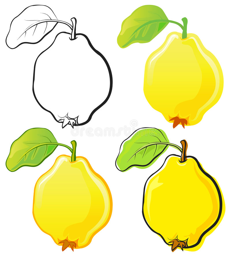 Download Quince stock vector. Image of food, sweet, black, fruits - 6808512