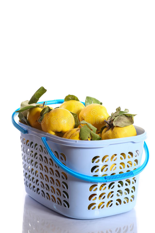 Download Quince in a basket stock image. Image of golden, isolated - 34319295