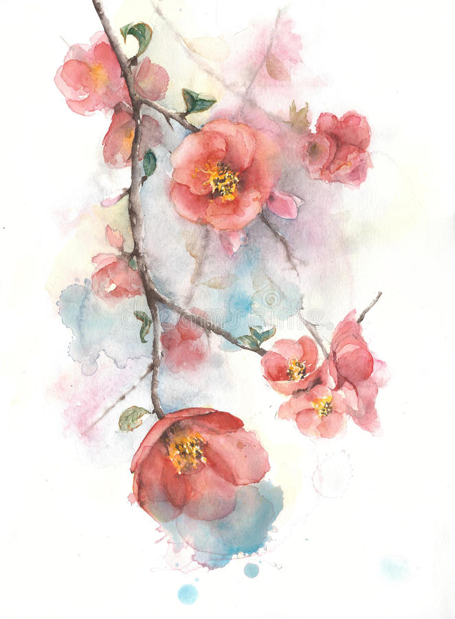 Quince flowers spring tree blooming blossom watercolor painting illustration stock illustration