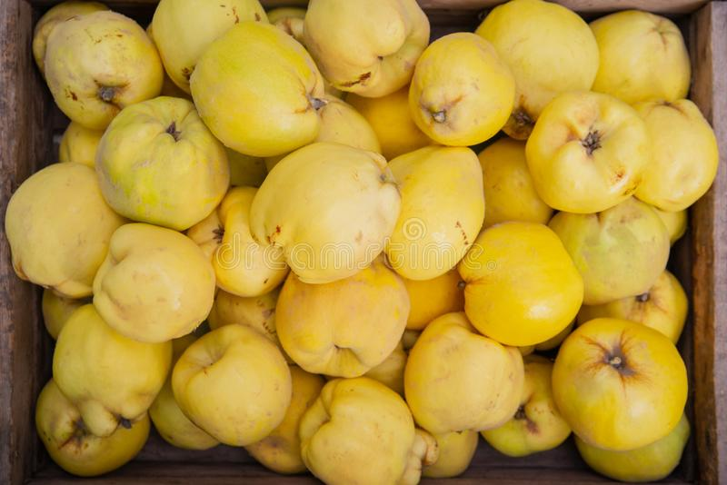 Quince fruit in a basket stock photo