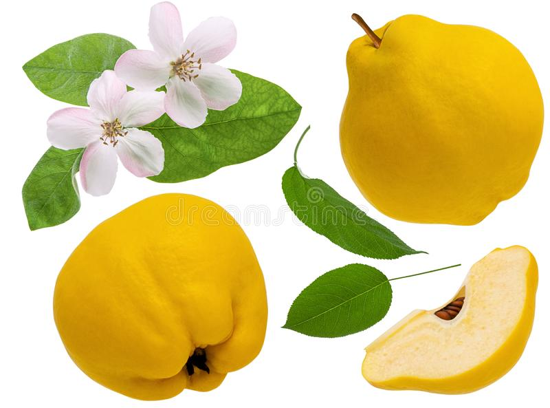 Quince fruit isolated on white background. Set the whole ripe quince and slice piece with flower and green leaves as detail for royalty free stock photography