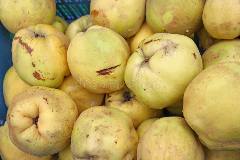 quince Marmelo orgânico fresco Textura do fundo do fruto do marmelo Papel de parede amarelo dos marmelos Conceito saudável comer  foto de stock