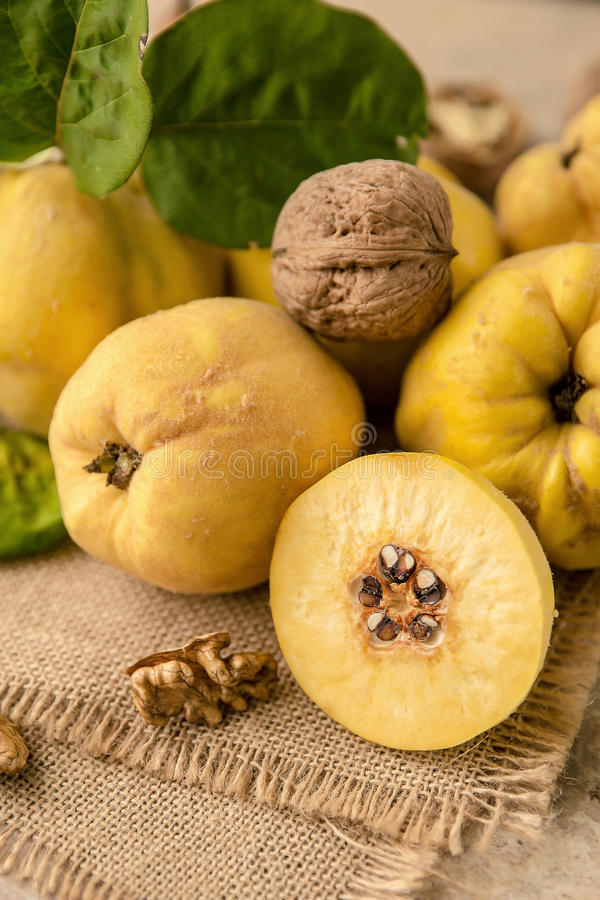 Quince. Pile Of Juicy, ripe quince fruit royalty free stock photography