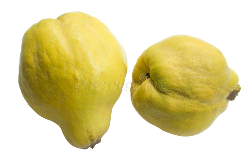 Download Quinces stock photo. Image of food, vegetable, isolated - 11612226