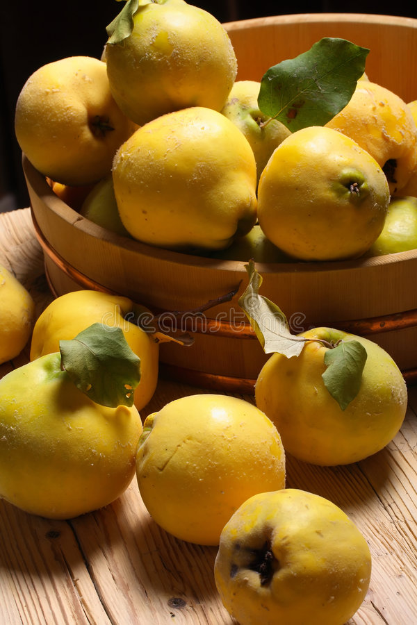 Free Quinces Stock Images - 3300444