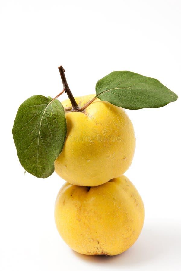 Quinces amarelos frescos imagem de stock