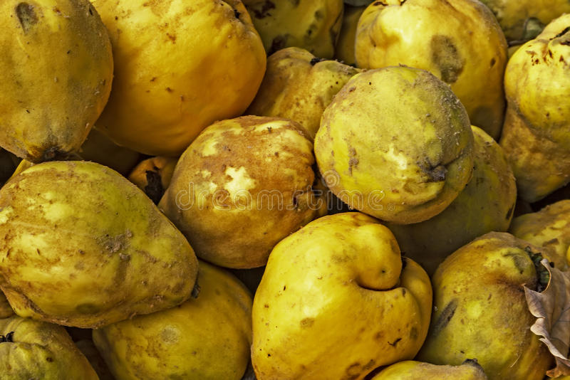 Download Quinces Stock Images - Image: 34472604
