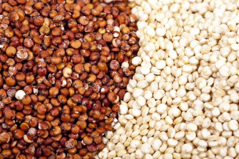 quinoa royaltyfria foton