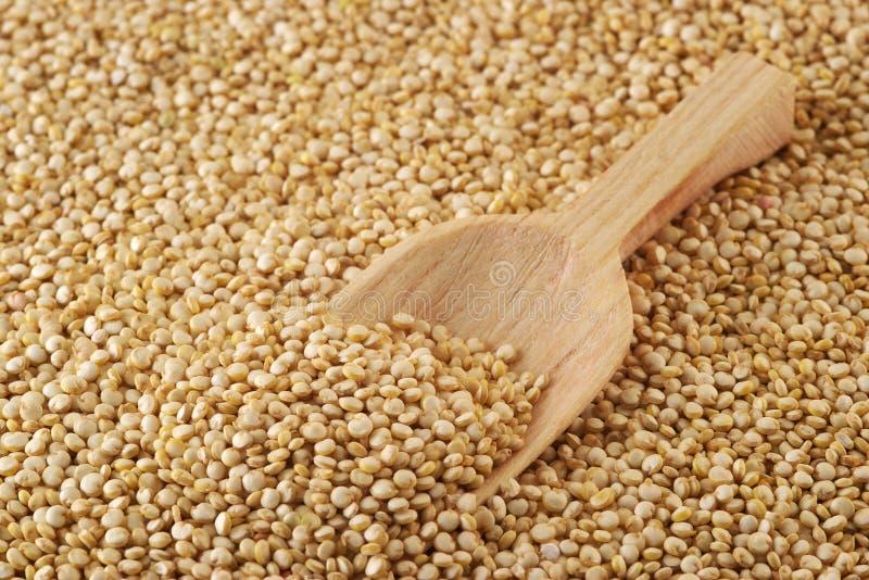 quinoa стоковая фотография rf