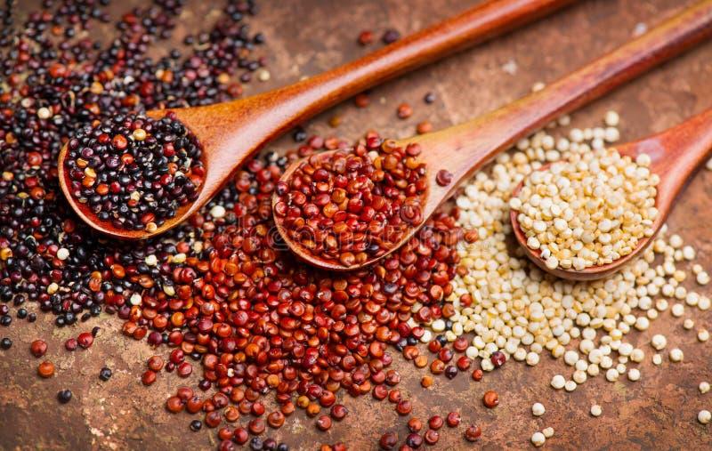 Quinoa Grões vermelhas, preto e branco do quinoa no colheres de madeira Chenopodium - quinoa imagem de stock