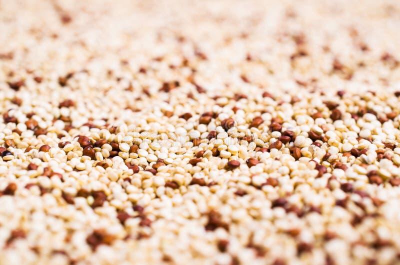 Quinoa mélangé de graines sèches image libre de droits