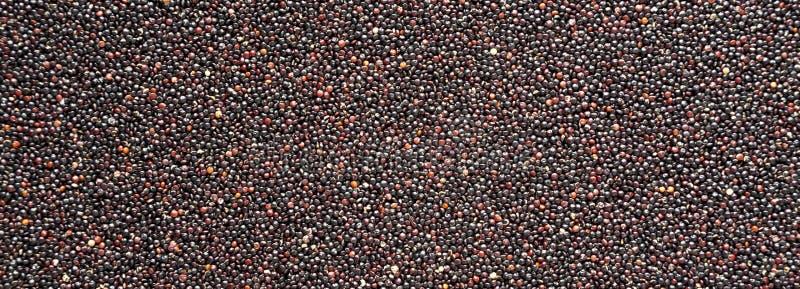 Quinoa negra orgánica cruda libre del gluten, primer imagen de archivo libre de regalías