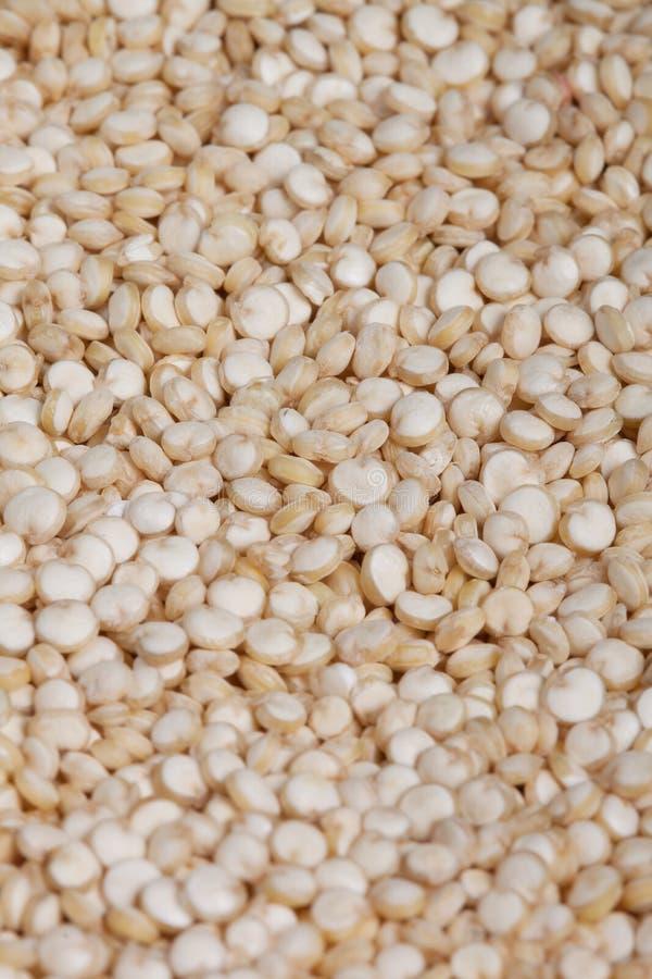 Quinoa tło fotografia stock