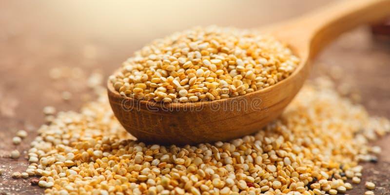 Quinoa. White grains in a wooden spoon. Gluten free healthy food. Seeds of white quinoa - Chenopodium quinoa stock images