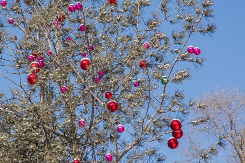 Download Quinquilharias Do Natal Com Neve Na árvore Foto de Stock - Imagem de vermelho, roxo: 65581724