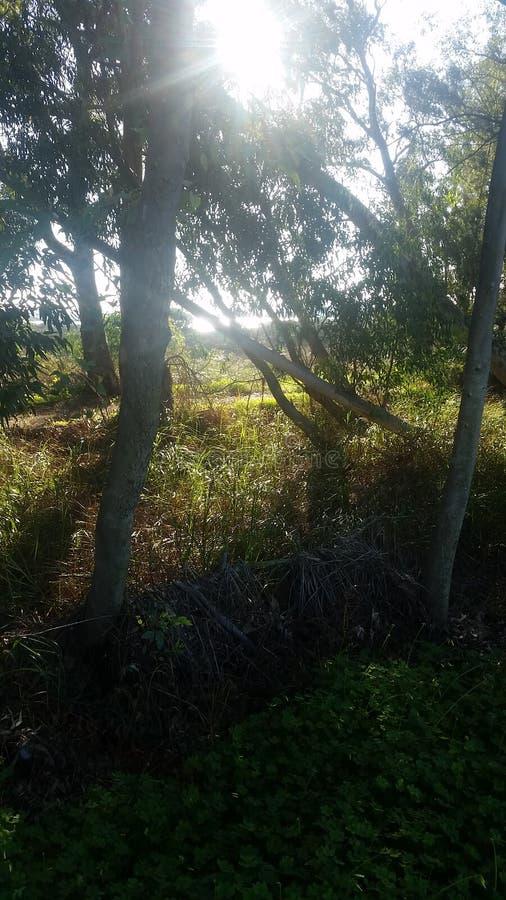 Quinta do Lago royalty free stock photography