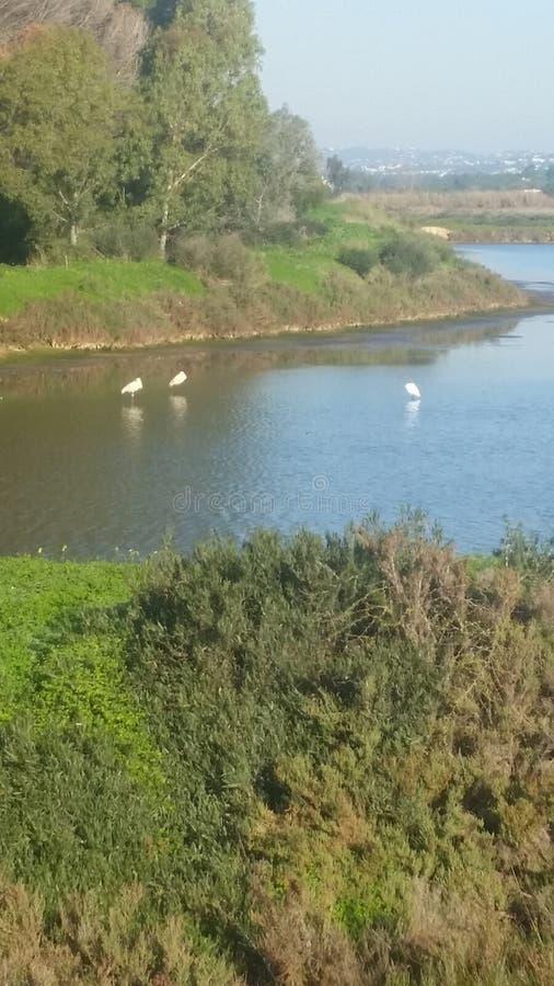 Quinta do Lago royalty free stock photo