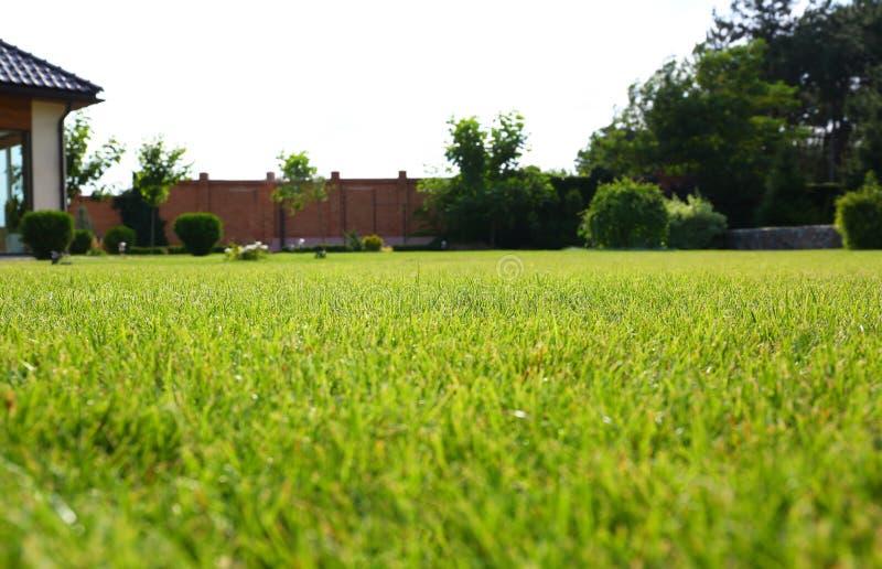 Quintal com grama verde e exuberante no dia ensolarado Jardinagem e paisagens imagens de stock royalty free