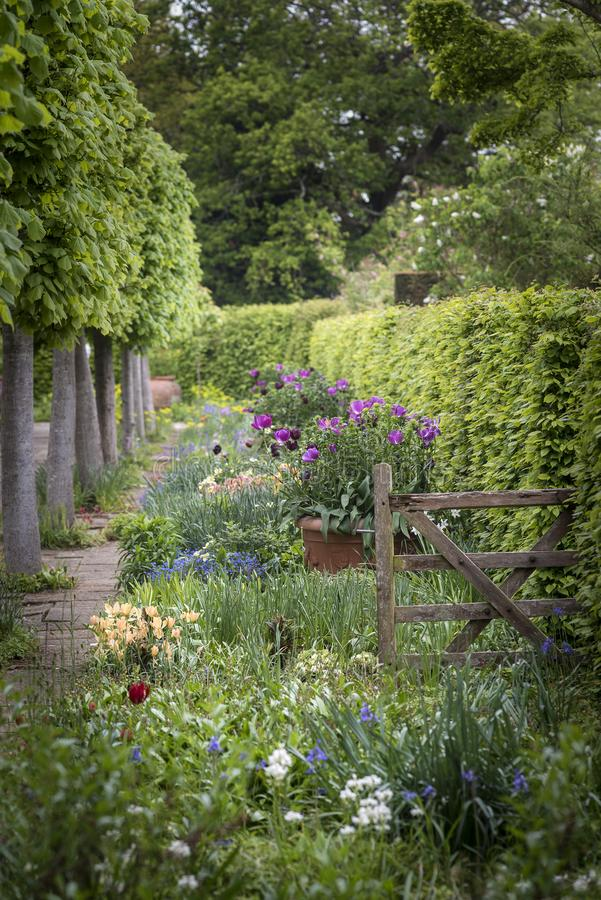 Quintessential vibrant English country garden scene landscape wi. Quintessential English country garden scene landscape with fresh Spring flowers in cottage stock photos