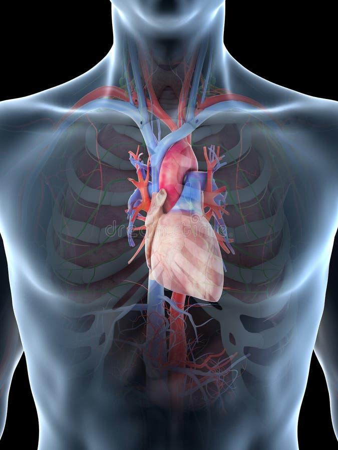 ?quipe le coeur illustration stock