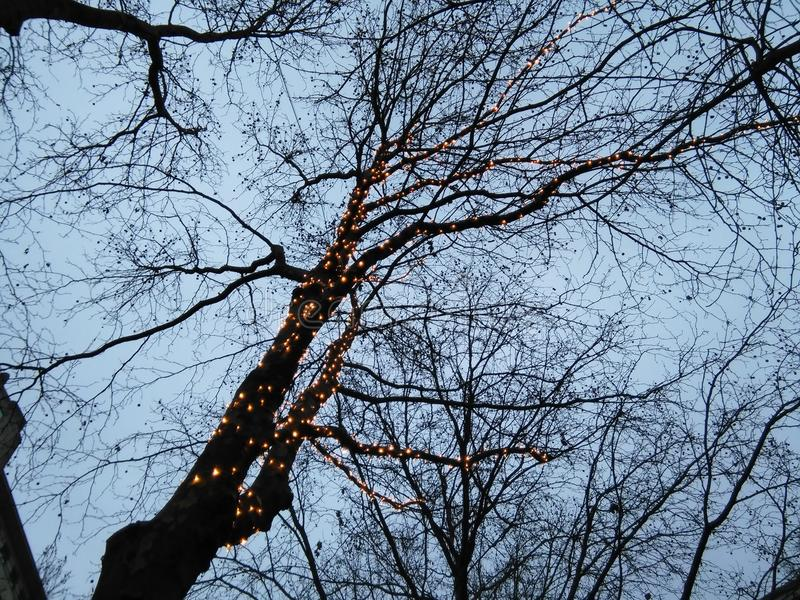 Quirlandes électriques dans l'arbre photos libres de droits