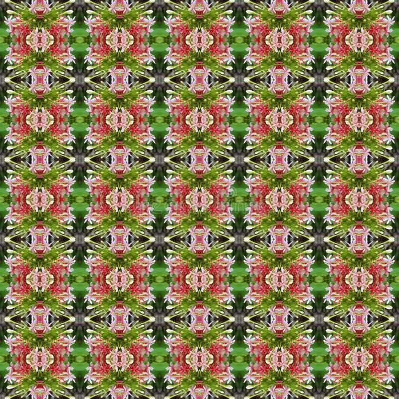 Quisqualis印度的花桃红色花束无缝 库存例证
