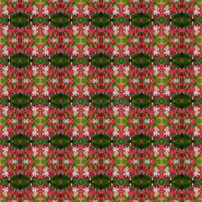 Quisqualis印度的花美丽的花束无缝 向量例证