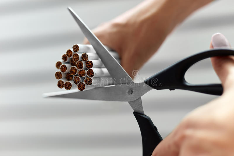 Quit Smoking. Closeup Of Woman Hands Cutting Cigarettes. Quit Smoking. Closeup Of Beautiful Woman Hands Holding Bunch Of Cigarettes And Cutting Them With stock images