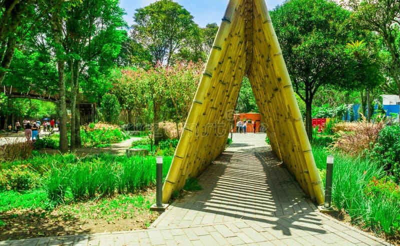 QUITO ECUADOR NOVEMBER, 28, 2017: Utomhus- sikt av folk som nästan går en bamburotting i en lokaliserad botanisk trädgård royaltyfria foton