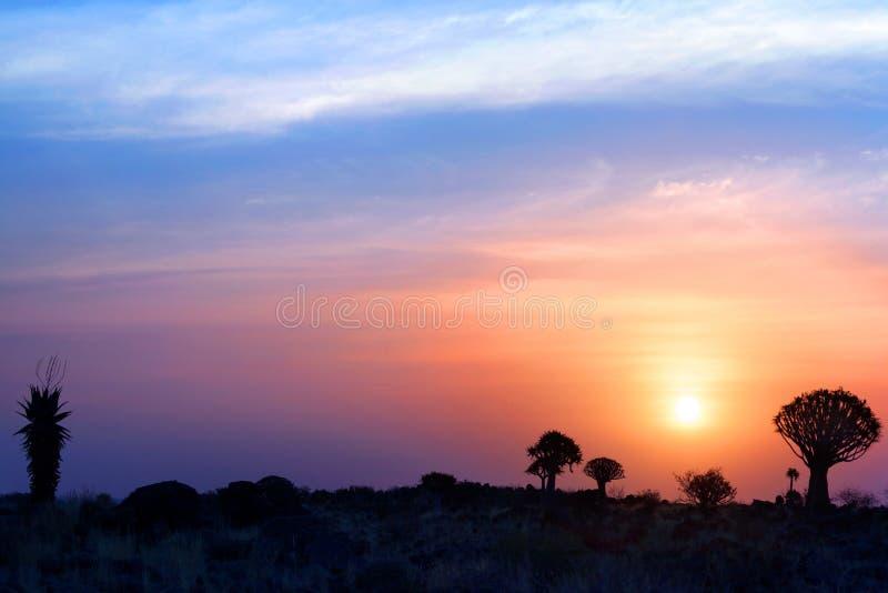 Quiver bomensilhouetten op de heldere achtergrond van de zonsonderganghemel, prachtig Afrikaans landschap in Keetmanshoop, Namibi stock afbeeldingen
