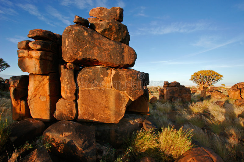 Download Quiver tree landscape stock photo. Image of african, granite - 1417434