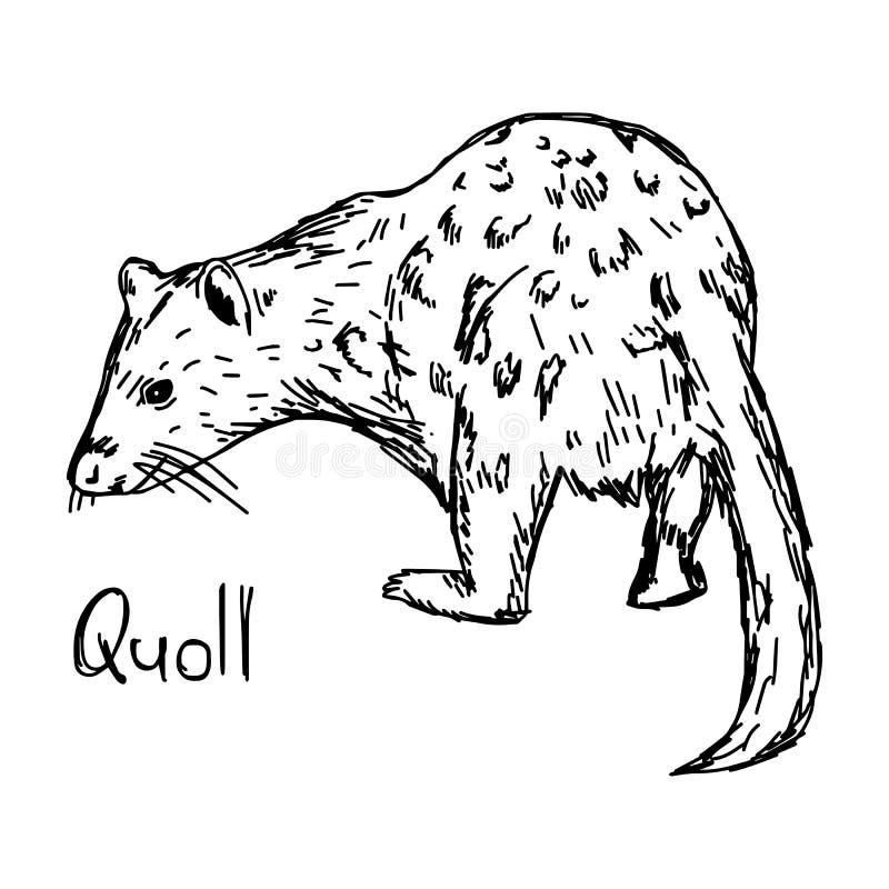 Quoll -传染媒介例证剪影手拉与黑线, 向量例证