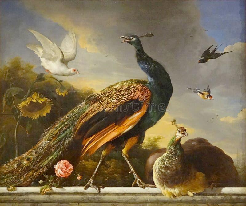 """""""paons, Mâle Et Femelle"""", Melchior De Hondecoeter, 1681. Musée Du Petit Palais, Paris. Free Public Domain Cc0 Image"""