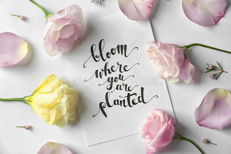 Quote `Bloom where you are planted` written on paper with petals and flowers stock image