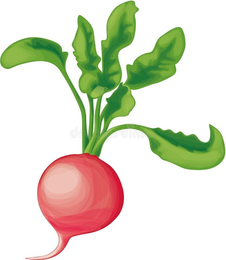 Rábano con verdes ilustración del vector