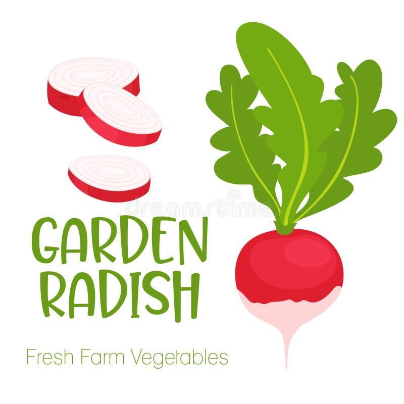 Rábano del jardín del vector aislado en el fondo blanco Ejemplo vegetal para el menú del mercado de la granja Diseño sano de la c stock de ilustración