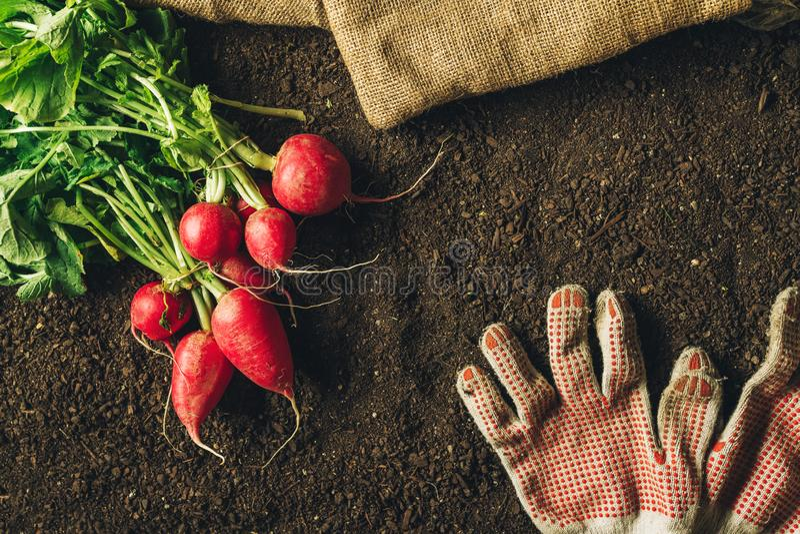 Rábanos rojos y pares de guantes que cultivan un huerto, visión superior imagenes de archivo