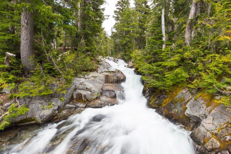Rápidos en el río del paraíso, Mt rainier fotos de archivo