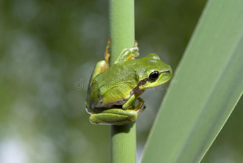 Download Râ foto de stock. Imagem de verde, macro, fauna, nave - 16865624