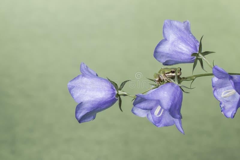 Râ em flores imagens de stock royalty free