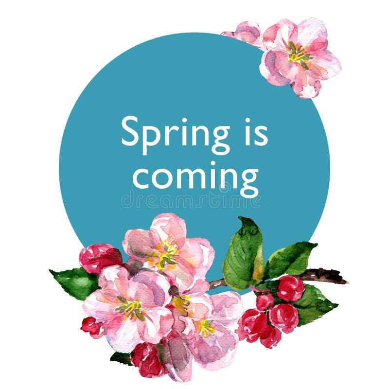 Różowi jabłczani kwiaty rozgałęziają się, kwitnący kwitną na błękitnym okręgu z tekstem, kwitnie jabłka, wiosny pojęcie, odizolow obraz royalty free